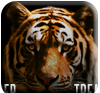 Tiger Treasures Free Slots Demo