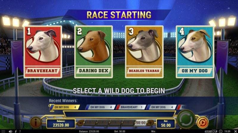 Wildhound Derby :: Select a wild dog to begin free spins
